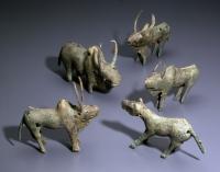 Kaikoko Oxen